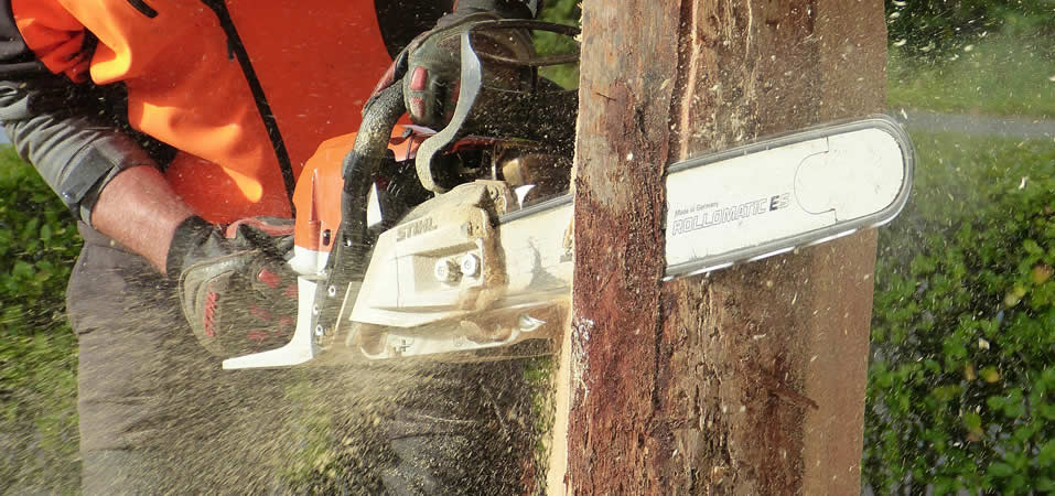 Chainsaw Basic Felling Techniques