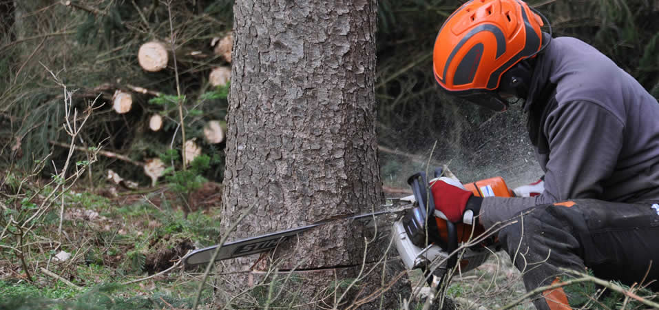 Lantra Felling and Processing Trees over 380mm
