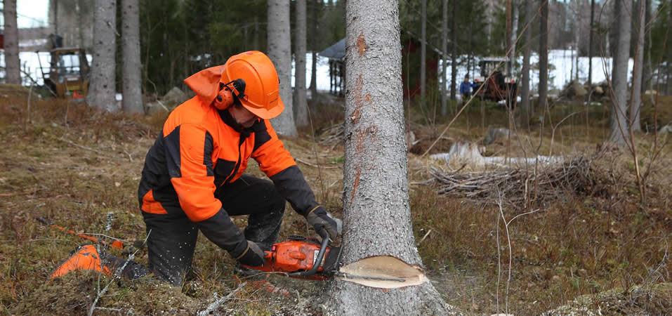 Lantra Chainsaw Maintenance, Cross-cutting, Felling and Processing Trees up to 380mm +F Refresher
